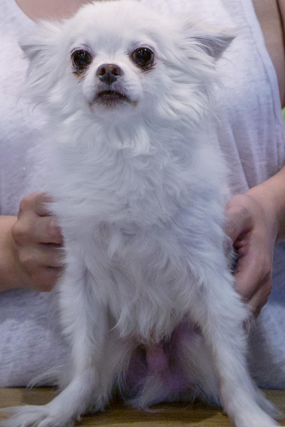dog grooming Pasadena